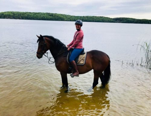Stockholm horse show